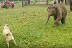 Why This Baby Elephant Threw A Tantrum Is Too Relatable