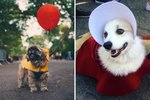 Halloween Dog Costumes That Can Only Happen In 2017