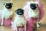 Here Are 18 Pets Who Are Way Better Dancers Than You