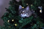 How to Keep a Cat Away From a Christmas Tree