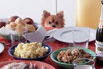 Just 18 Pets Who Are Freaking Out About Thanksgiving