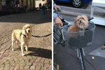 Woman Takes Only Very Important Photos Of Dogs During Vacation To France