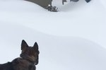 Tall Dog Cutting Path In Snow For Shorter Dog Is The Stuff Of Which #BFFGoals Are Made