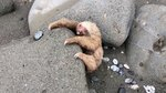Predators Lurk Near Baby Sloth Clinging For Life; What Happens Next Is Heroic