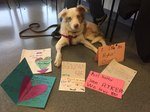 Rescue Dog Surprises Second Graders Who Saved His Life