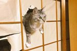 15 Cats Who Are In Big Trouble