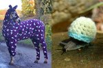 20 Animals Who Are Embracing Sweater Weather