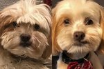 Dog's Dramatic Makeover Spawns Hilarious Twitter Thread