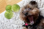 Twitter Can't Get Over This Yorkie Who Prefers Veggies Over Meat