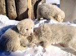 These 3 Incredible Puppies Survived 5 Days In The Rubble Of An Avalanche