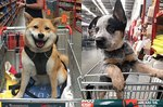 People Are Sharing Pics Of Dogs In Shopping Carts & We're Soooo Here For It