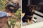 This Peg-Legged Pup Is The Precious Poster Dog For Survival