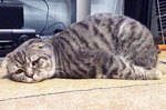 32 of the Laziest Cats The World Has Ever Seen