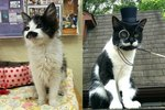 BEST FACE FURRRWARD: 16 Cats With Flawless Mustaches