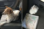 Jack Russell Terrier Leads Truck Driver To Abandoned Bunny
