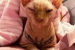 Help Ban Model Who Tattooed Her Cat For Likes On Instagram