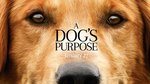 """""""A Dog's Purpose"""" May Be Inspired By Grief, But Brings Us Hope"""