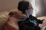 This Cuddly Pit Bull's Love For His Mom Will Warm Your Heart