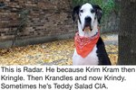 We Can't Get Enough Of People Sharing How Their Pets Got Their Nicknames
