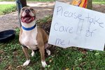 This Dog Was Found Abandoned With A Bag Of Food & A Note