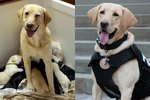 Serving & Protecting Is A Family Affair For This Police Dog & Her 4 Puppies