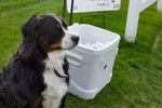Dog Uses A Unique Skill To Raise Money For Shelter Animals