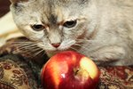 Homemade Diet for Cats With Kidney Failure