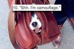 20 Precious Pups In Bags