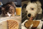 Just 26 Of The Most Breakfast-Loving Pets You'll Ever See