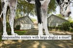Rent A Dream Home Designed With Big Dogs In Mind