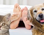 Do Dogs And Cats Know When You're Having Sex?