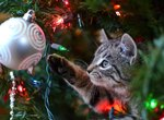 Wreck the Halls: 12 Pictures of Cats Destroying Christmas Trees