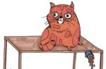 9 Things Your Cat Is Trying to Tell You