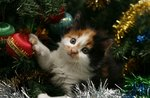 Apocalypse Meow: Cats Vs. Christmas Trees