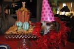 Woman's Dying Wish Was A Birthday Bash For Her Dog