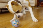 This Toy Takes Hilarious Photos Of Your Pet Playing