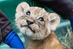 We All Win When Rival Zoos Compete For Cutest Animal