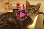 Tabby Cat's Hilarious Response Every Time Her Human Asks If She's Hungry