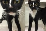 Somebody Build A Catwalk For This Long-Legged, Pretty Kitty