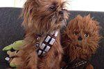 29 Pets Whom The Force Is Definitely With