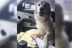 Shelter Dog's Gesture Of Thanks Will Make You Happy Cry