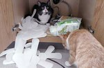 OMG, These 28 Cats Are So Rude!