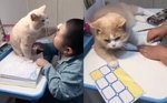 Affectionate Cat Gives Boy Convenient Excuse Not To Do Homework