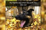 15 Wholesome Snaps About Silly Dogs To Share With Your Mom