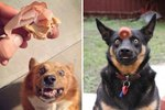 Literally, Just The 25 Funniest Photos Of Pets Staring At Food