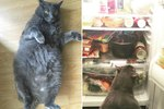 Try Not To Be Jealous Of The Fattest Cat On Instagram, Okay?