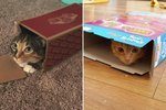 26 Tiny Cats Sitting In Tiny Boxes