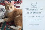 Cat Banned From College Library Is Now An Internet Folk Hero