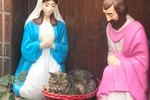 Grumpy Sourpuss Caught Sitting On Baby Jesus In Hilarious Nativity Scene Photo