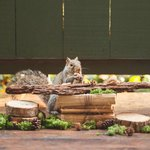Woman Hosts Fancy Dinner Parties For Squirrels In Her Backyard
